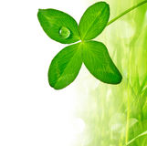Four leaf clover Stock Images