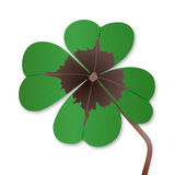 Four-leaf clover. On white Stock Images