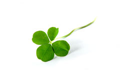 Free Four Leaf Clover Royalty Free Stock Photo - 3773465