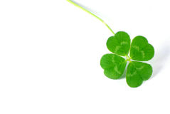 Free Four Leaf Clover Royalty Free Stock Photography - 3942207