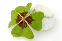 Four leaf clover. On white stock photos