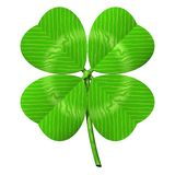 Four Leaf Clover. Perfect four-leaved clover isolated on white Stock Photography
