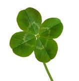 Four Leaf Clover. Isolated on white Royalty Free Stock Photography