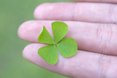 Four Leaf Clover. Depicting luck, charm, with a hand holding a four leaf clover Royalty Free Stock Images