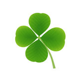 Four leaf clover. Green lucky four leaf clover, planjt, vector Stock Image