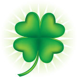 Four Leaf Clover. An image of a four leaf clover Stock Image
