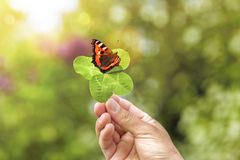 Four-leaf clover with butterfly stock images