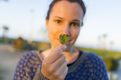 Four-leaf clover. Royalty Free Stock Images