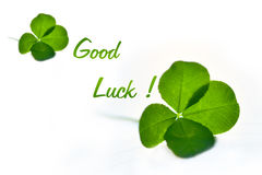Four leaf clover for good luck. Four leaf clovers lying on white background and green text ` good luck Royalty Free Stock Images
