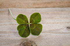 Four-leaf clover for good luck stock images