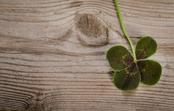 Four-leaf clover for good luck Royalty Free Stock Photography