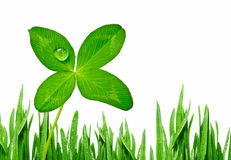 Four leaf clover and grass border Stock Photo
