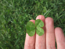 Four leaf clover in hand. Four-leaf clover among fingers on the grass Stock Photography