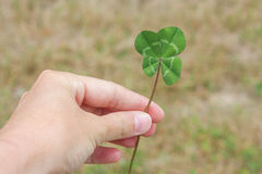 Four-leaf clover in Hand Horizontal Stock Image