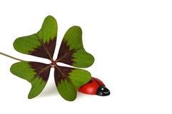 Four leaf clover and ladybug Royalty Free Stock Photo