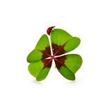 Four leaf clover and ladybug isolated on white background Royalty Free Stock Photos