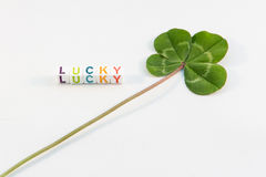 Four-leaf clover with lucky word Stock Image