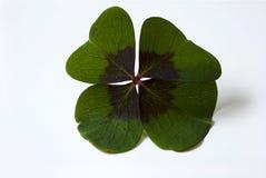 Four leaf clover Stock Photos
