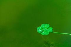 Four Leaf Clover over water Stock Photo