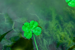 Four Leaf Clover over water 3 Royalty Free Stock Images
