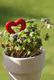 Four leaf clover and a red heart Stock Image