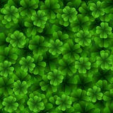 Four leaf clover seamless pattern. Royalty Free Stock Photos