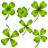 Four Leaf Clover Set Stock Photography