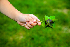 Four leaf clover, shamrock in the hand Stock Image