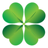Four leaf clover , shramrock Royalty Free Stock Image