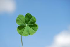 Four leaf clover and sky Stock Photos