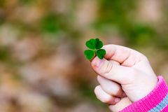 Four leaf clover in small hand Stock Image