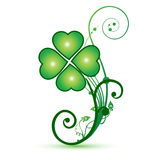 Four leaf clover St Patrick's Day. Four leaf clover isolated on white - symbol of holiday St Patrick's Day picture background Stock Photo