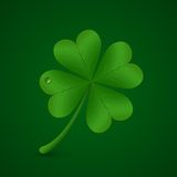 Four leaf clover. St. Patricks day symbol Royalty Free Stock Photo