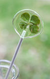 Four leaf clover sugar stick Stock Photos
