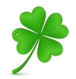 Four leaf clover. St. Patrick's day symbol vector illustration