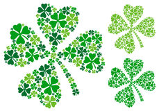 Four leaf clover, vector. Four leaf clover, lucky clover for St. Patrick's day, vector illustration Royalty Free Stock Image