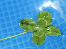 Four leaf clover in the water Stock Photography