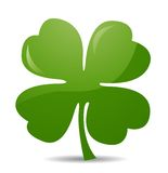 Four leaf clover. On white Royalty Free Stock Images