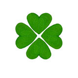 Four-leaf clover on a white background. Greem four-leaf clover, an good luck charm on a white background Royalty Free Stock Image