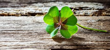 Four-leaf clover on wood with copy space, banner stock photography
