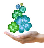 Four leaf clovers Royalty Free Stock Photos