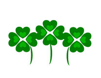 Four Leaf Clovers or Shamrocks Royalty Free Stock Photography
