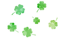 Four leaf clovers Stock Photography