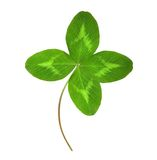 Four-leaf green clover. Stock Photos