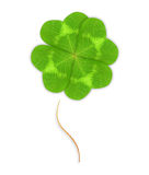 Four-leaf green clover leaf Stock Photography
