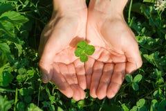 four leaf koniczynę Zdjęcia Stock