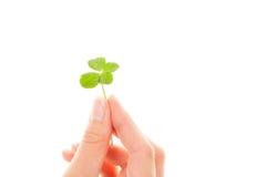 four leaf koniczynę Szczęsliwy liść Fotografia Royalty Free
