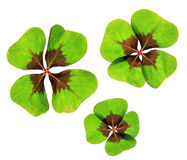 A four leaf lucky clover Stock Photo