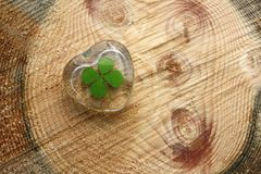 Four Leafed Clover Stock Image