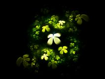 Four leafed clover on black Royalty Free Stock Images